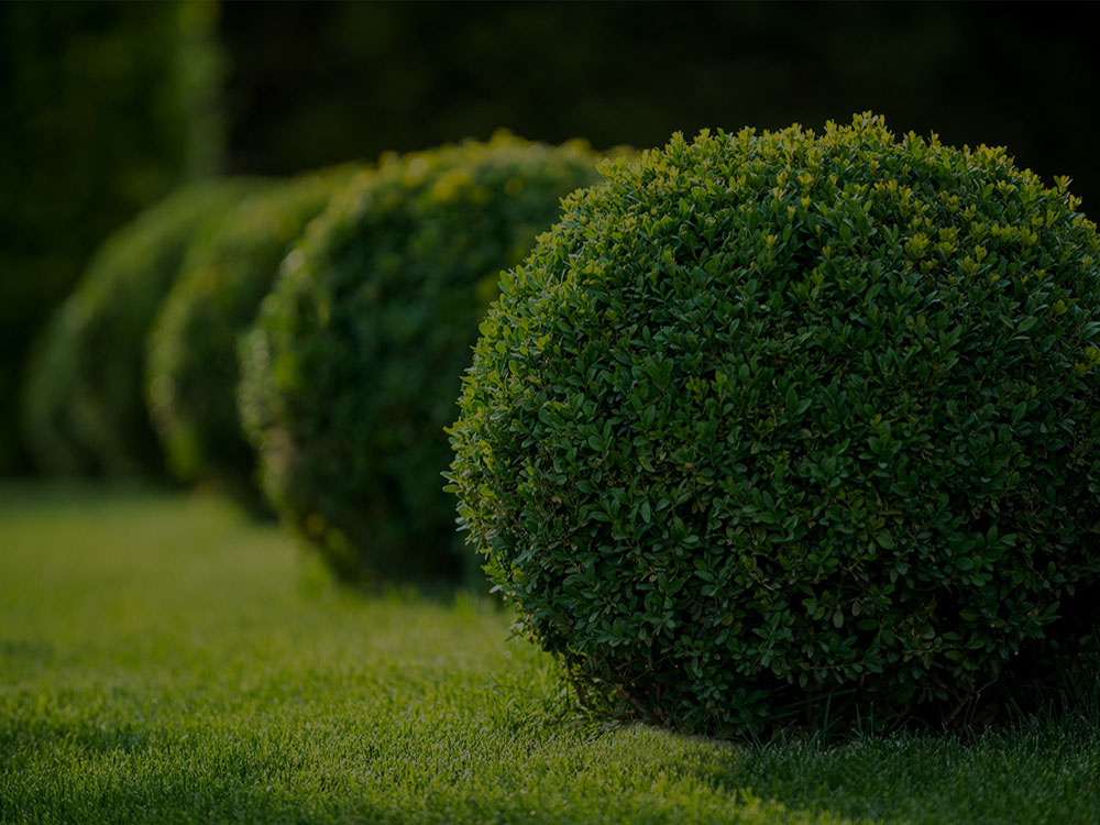 Collierville Landscaping